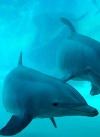 dolphin300605.jpg
